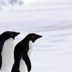 <JG2MLI・吉川氏、3回目の越冬隊参加へ>南極昭和基地「8J1RL」の近況を伝えるブログ「こちらは8J1RL南極昭和基地です」が久々の更新